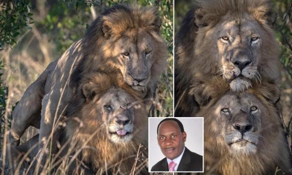 Ezekiel Mutua رئیس هیئت مدیره Kenya Film Classification Board در کنیا: «شیرهای همجنسگرا از مردان گی تقلید کردهاند»